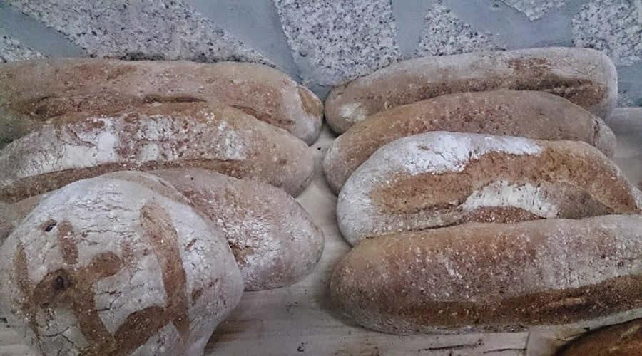 Taller horneando pan y roscas