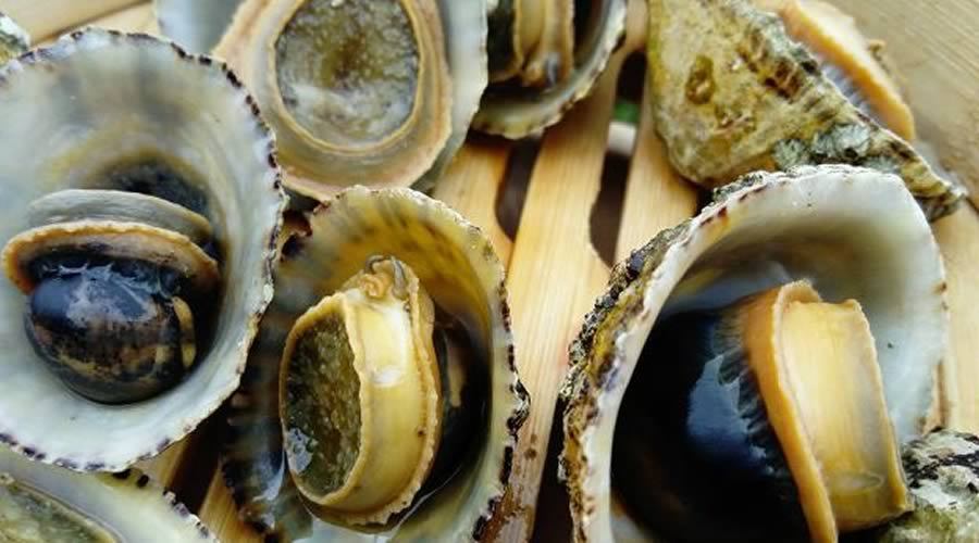 lapas de mar