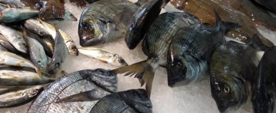 Pescado Gallego