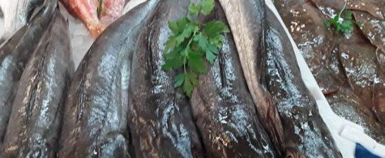 pescado gallego para restauracion